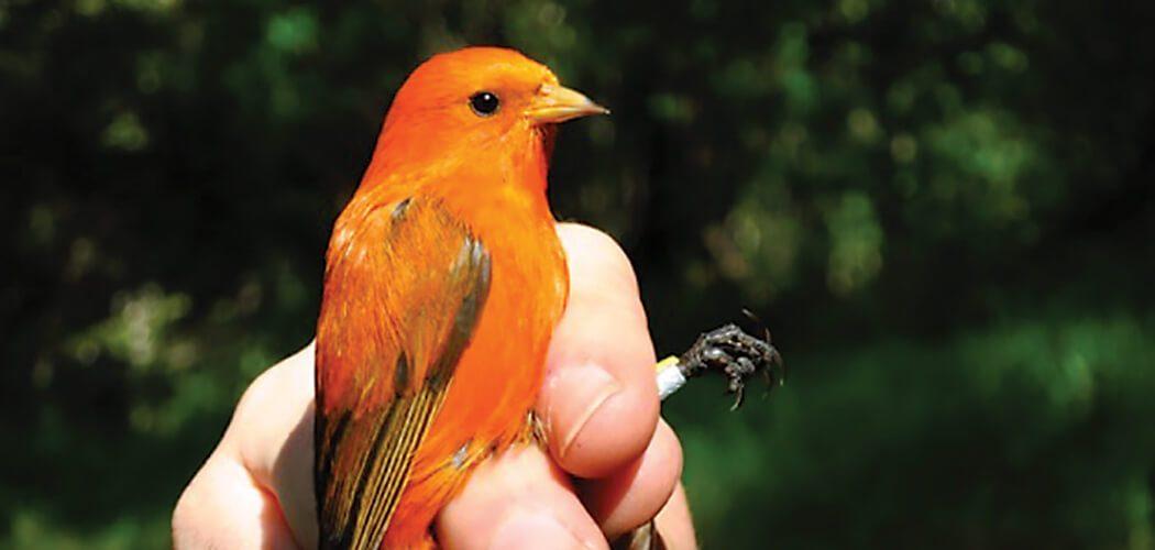 Bruce Peterjohn oversees the U.S. Geological Survey's Bird Banding Laboratory